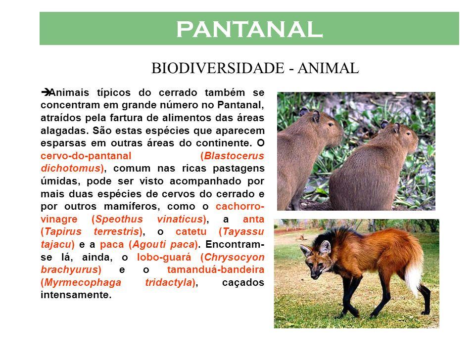 BIODIVERSIDADE - ANIMAL