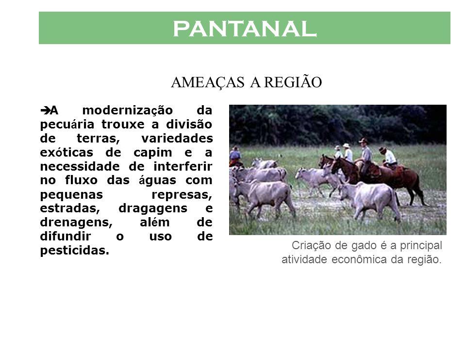PANTANAL AMEAÇAS A REGIÃO