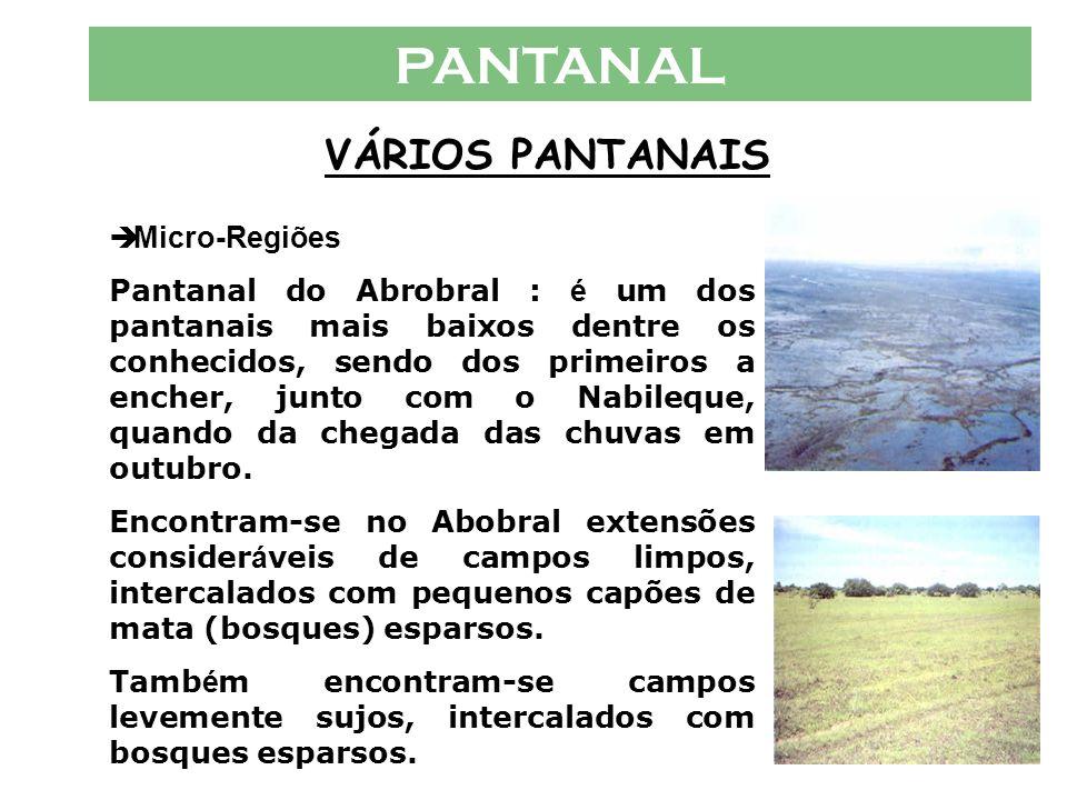PANTANAL VÁRIOS PANTANAIS Micro-Regiões