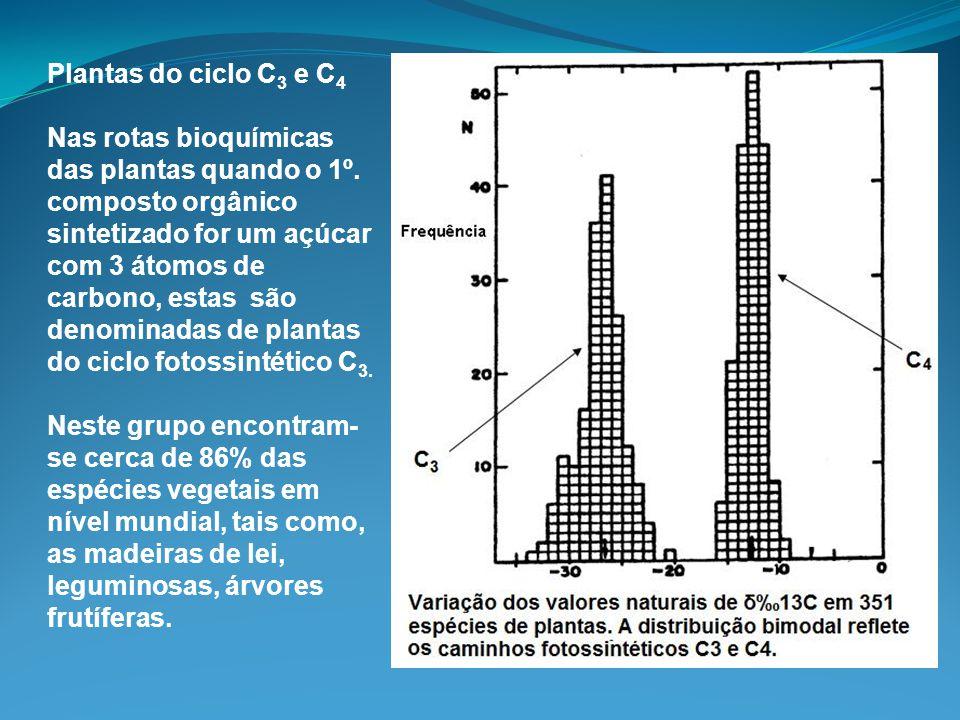 Plantas do ciclo C3 e C4