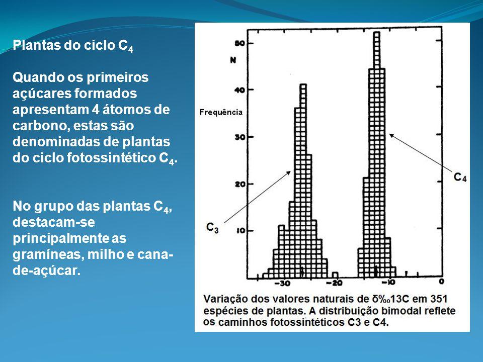 Plantas do ciclo C4