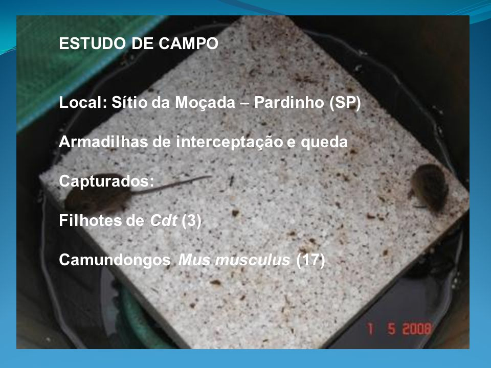 ESTUDO DE CAMPO Local: Sítio da Moçada – Pardinho (SP) Armadilhas de interceptação e queda. Capturados: