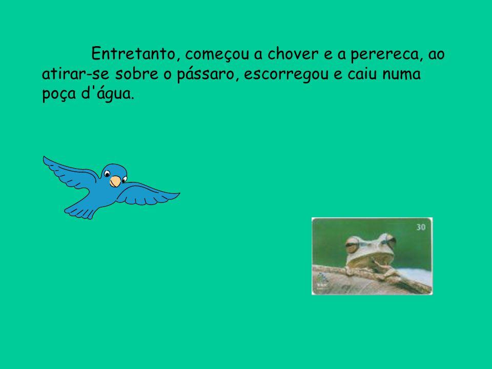 Entretanto, começou a chover e a perereca, ao atirar-se sobre o pássaro, escorregou e caiu numa poça d água.