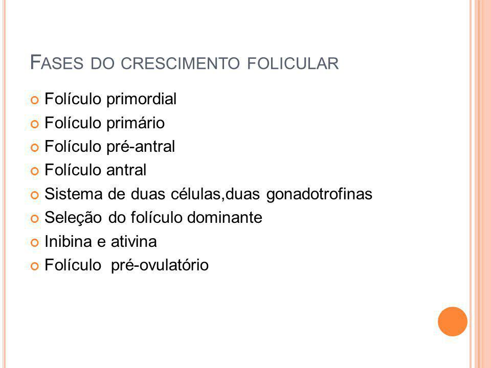 Fases do crescimento folicular