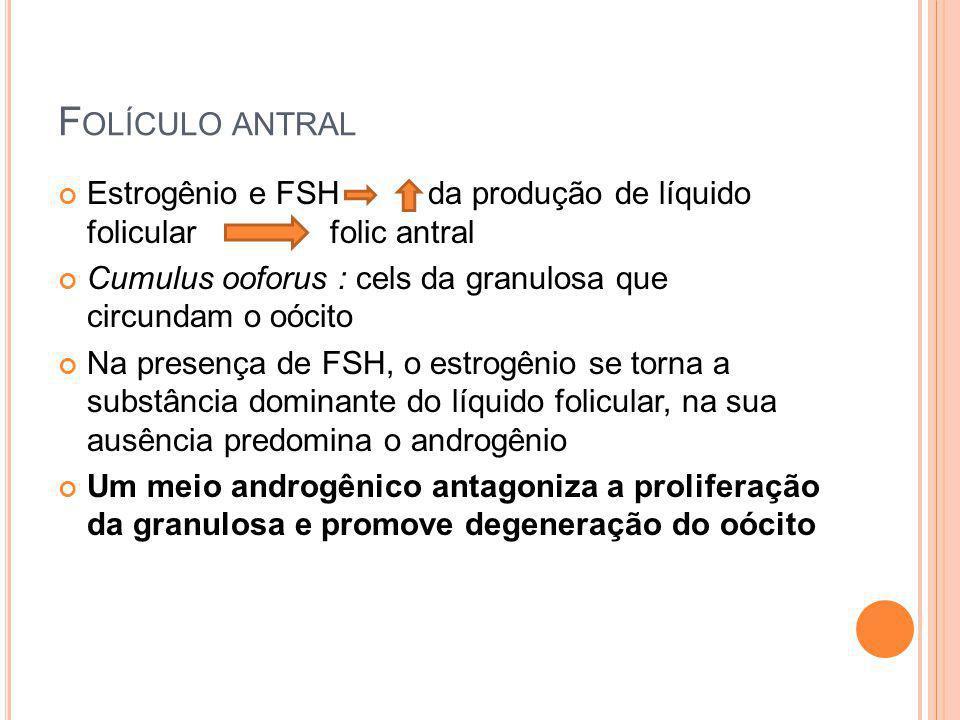 Folículo antral Estrogênio e FSH da produção de líquido folicular folic antral.