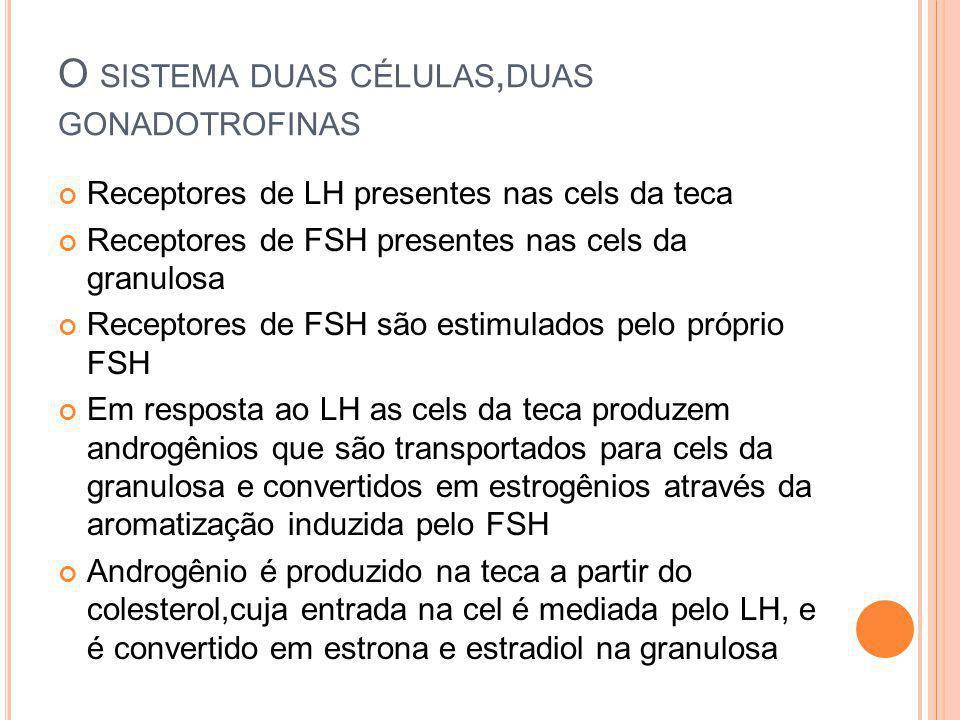 O sistema duas células,duas gonadotrofinas