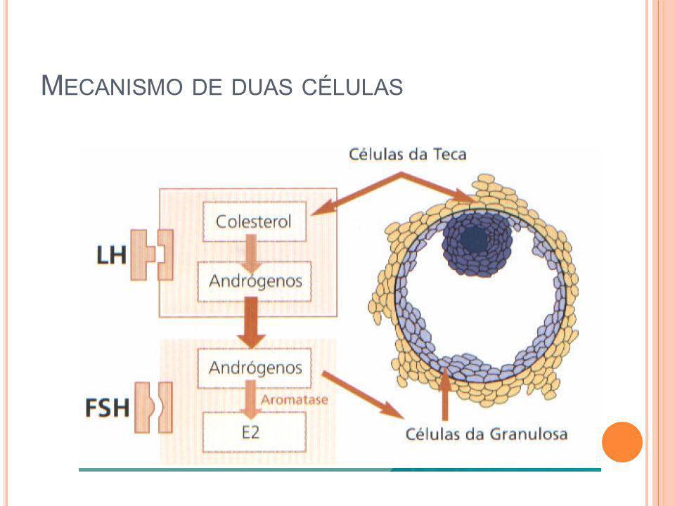Mecanismo de duas células