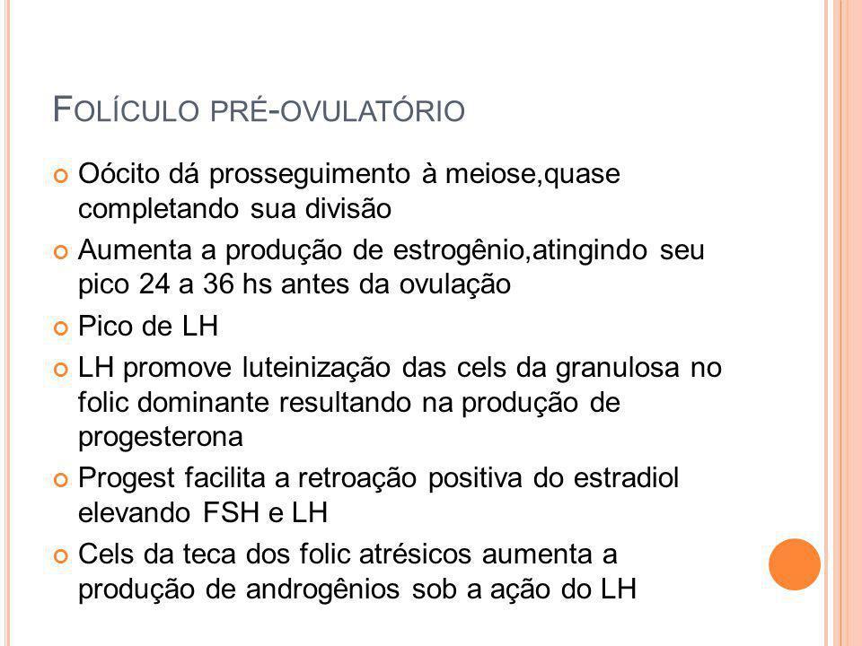 Folículo pré-ovulatório