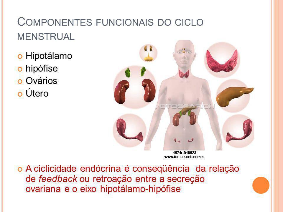 Componentes funcionais do ciclo menstrual