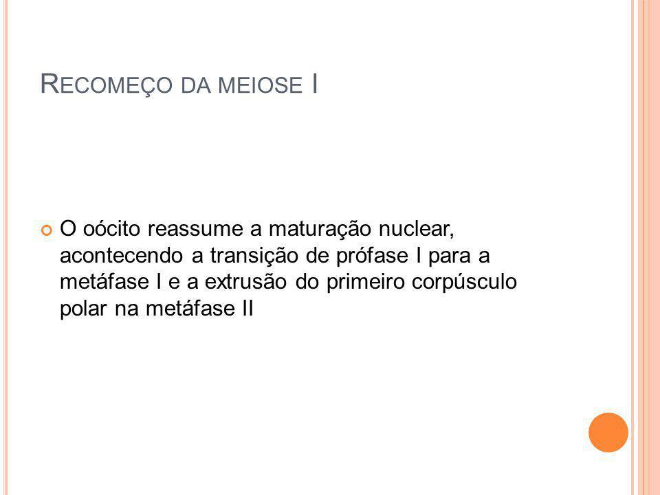 Recomeço da meiose I