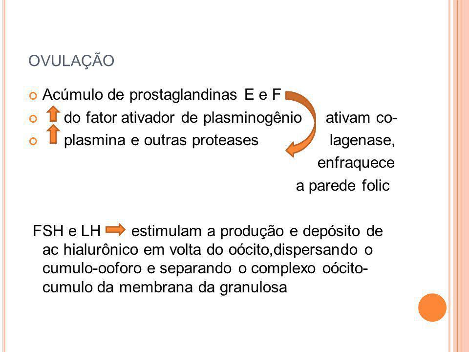 ovulação Acúmulo de prostaglandinas E e F