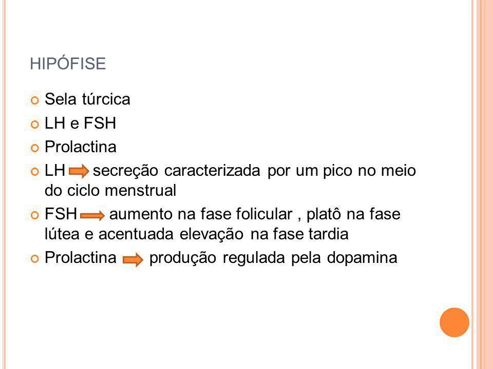 hipófise Sela túrcica LH e FSH Prolactina
