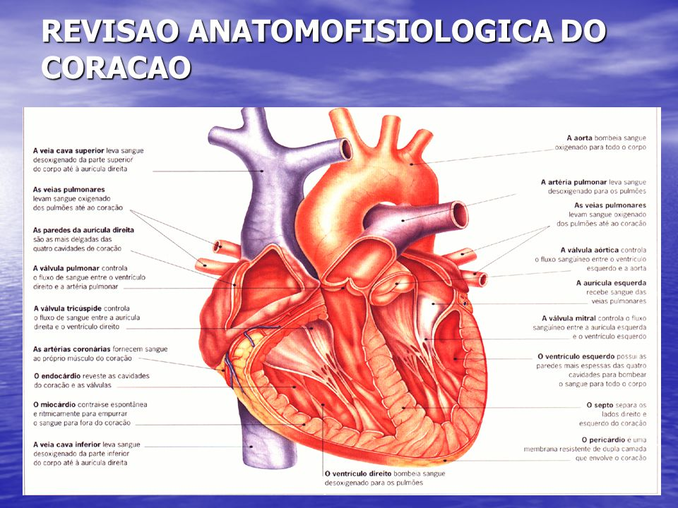 REVISAO ANATOMOFISIOLOGICA DO CORACAO