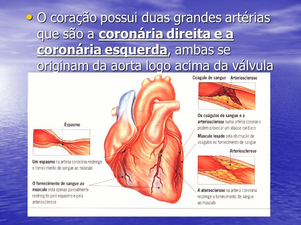 O coração possui duas grandes artérias que são a coronária direita e a coronária esquerda, ambas se originam da aorta logo acima da válvula aórtica.