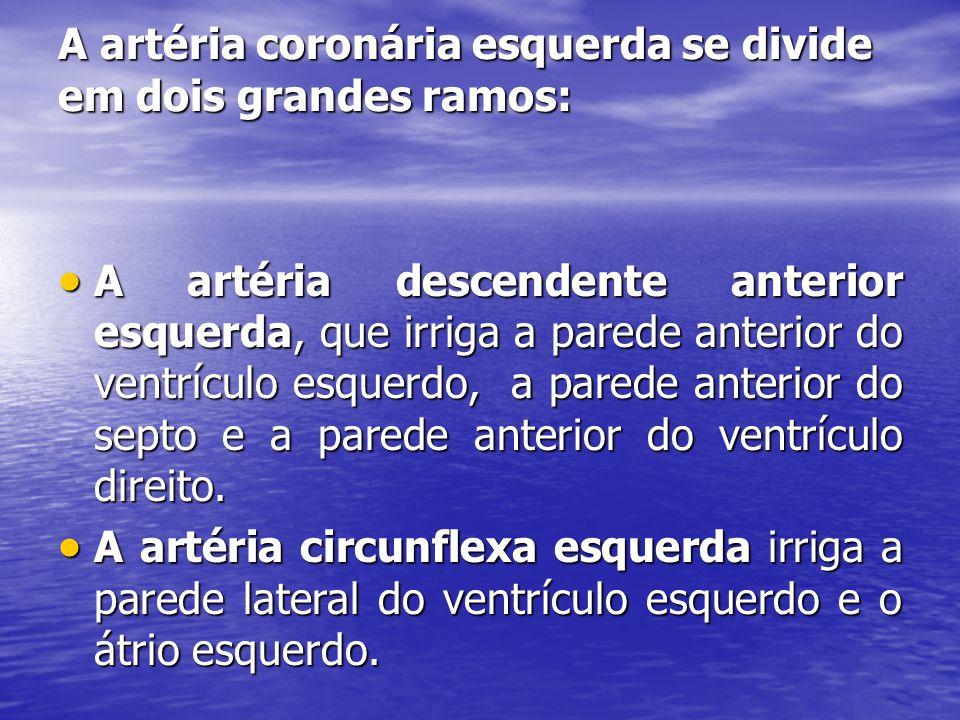 A artéria coronária esquerda se divide em dois grandes ramos: