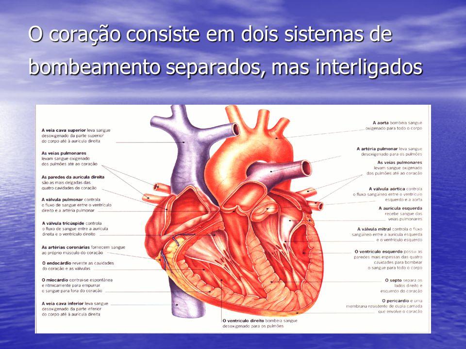 O coração consiste em dois sistemas de bombeamento separados, mas interligados