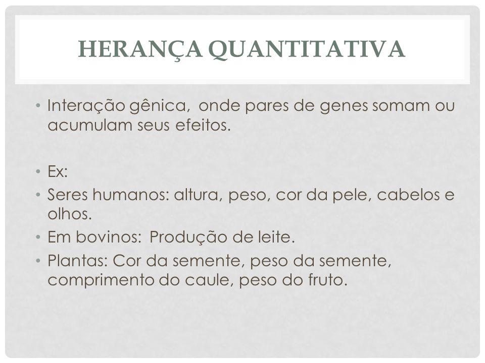 Herança Quantitativa Interação gênica, onde pares de genes somam ou acumulam seus efeitos. Ex: