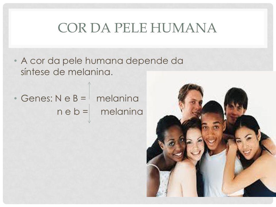 Cor da pele humana A cor da pele humana depende da síntese de melanina. Genes: N e B = melanina.