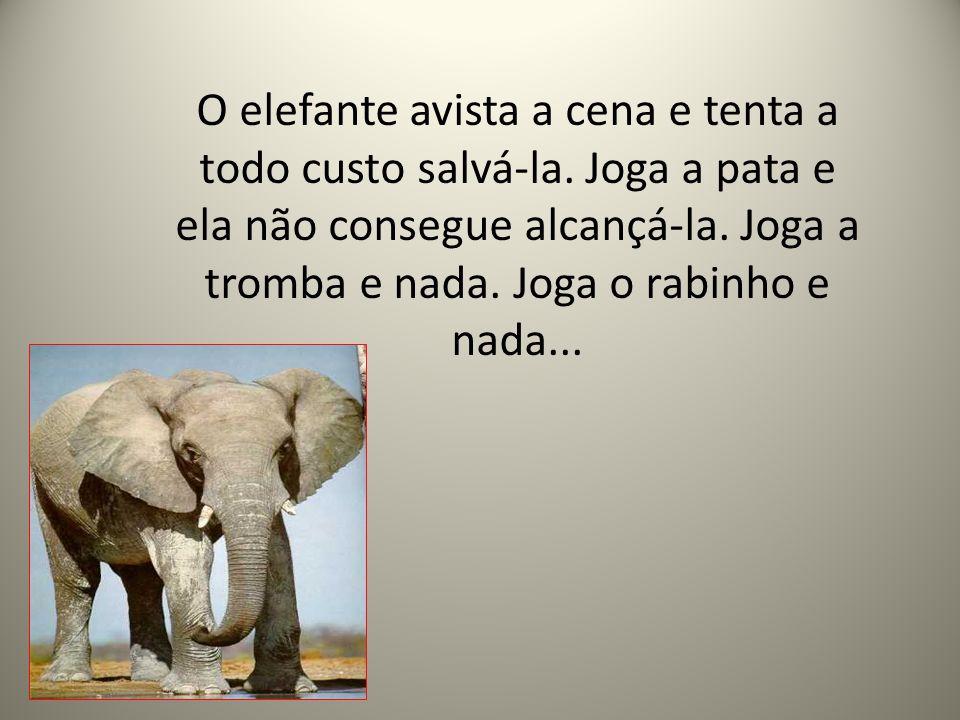 O elefante avista a cena e tenta a todo custo salvá-la