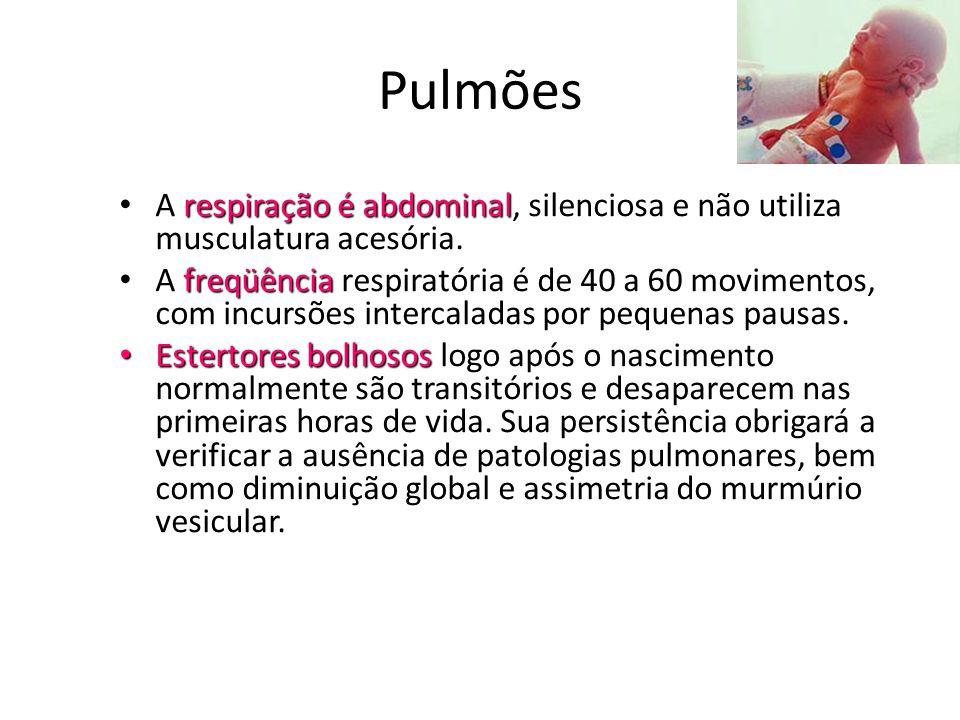 Pulmões A respiração é abdominal, silenciosa e não utiliza musculatura acesória.