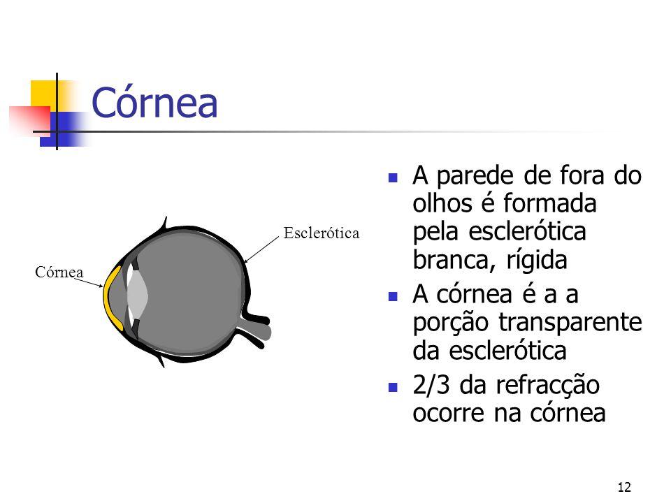Córnea A parede de fora do olhos é formada pela esclerótica branca, rígida. A córnea é a a porção transparente da esclerótica.