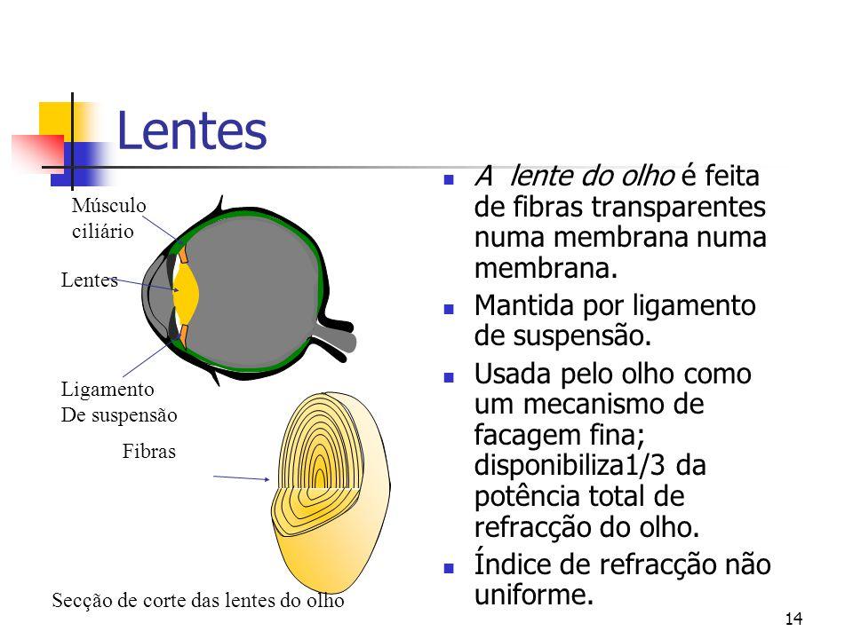 Lentes A lente do olho é feita de fibras transparentes numa membrana numa membrana. Mantida por ligamento de suspensão.