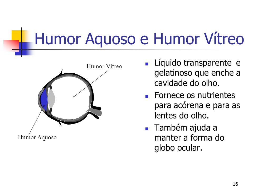 Humor Aquoso e Humor Vítreo