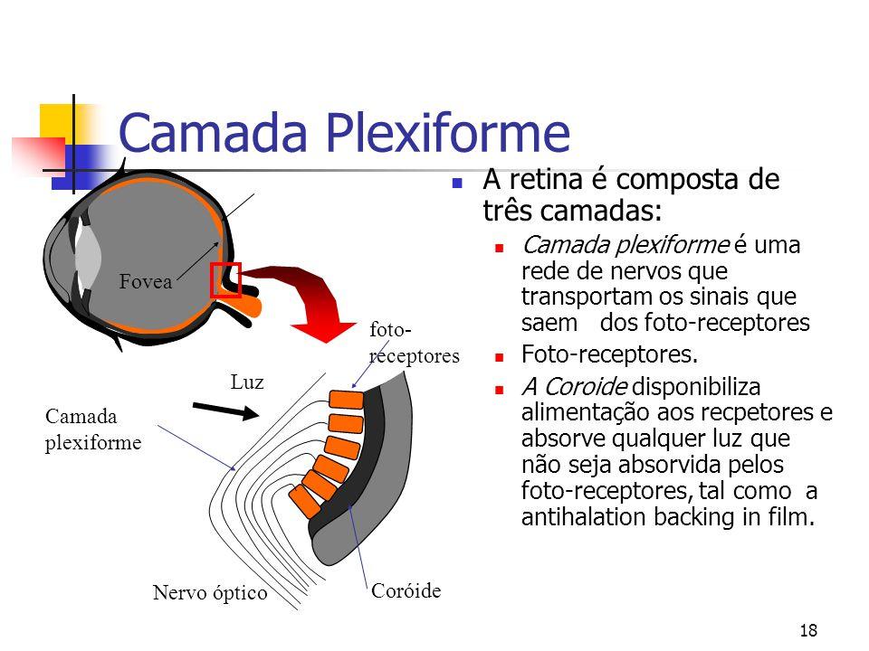 Camada Plexiforme A retina é composta de três camadas: