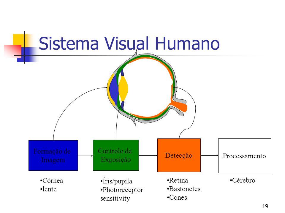 Sistema Visual Humano Formação de Imagem Controlo de Exposição