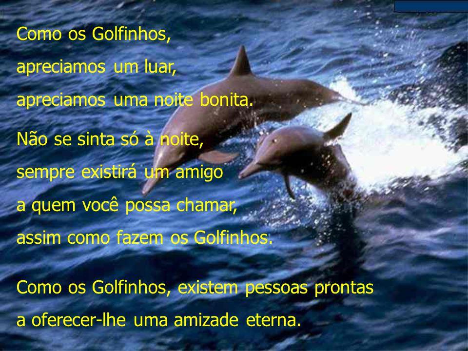 Como os Golfinhos, apreciamos um luar, apreciamos uma noite bonita. Não se sinta só à noite, sempre existirá um amigo.