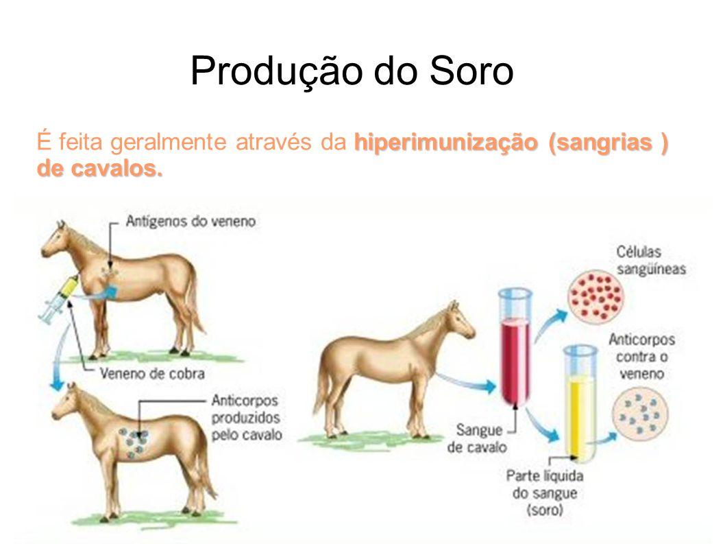 Produção do Soro É feita geralmente através da hiperimunização (sangrias ) de cavalos. .