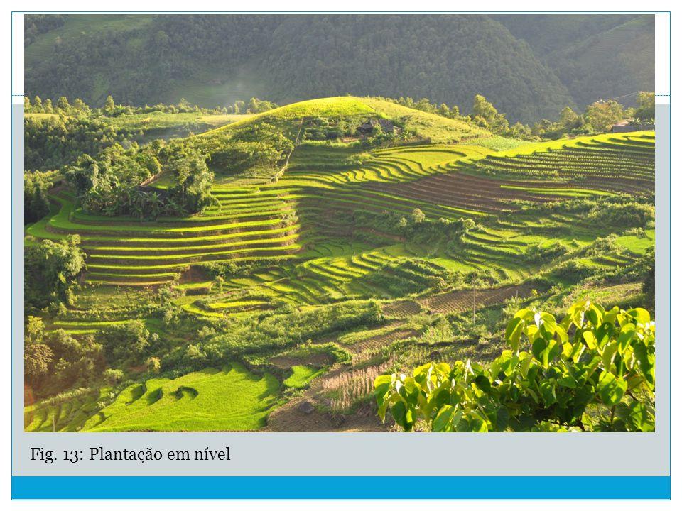 Fig. 13: Plantação em nível