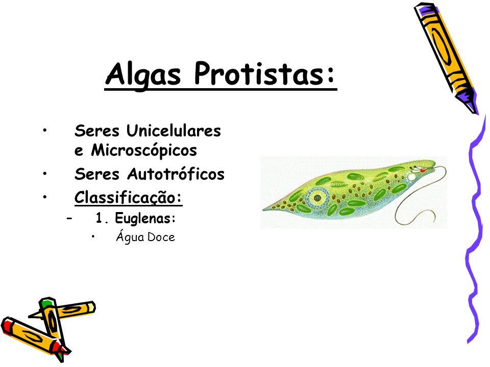 Algas Protistas: Seres Unicelulares e Microscópicos Seres Autotróficos