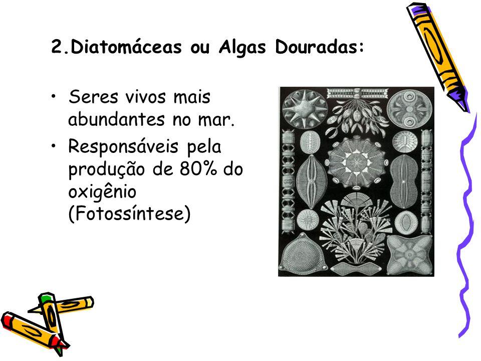 2.Diatomáceas ou Algas Douradas: