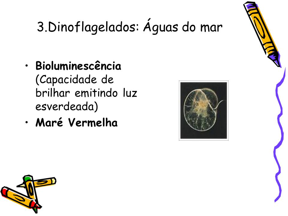3.Dinoflagelados: Águas do mar