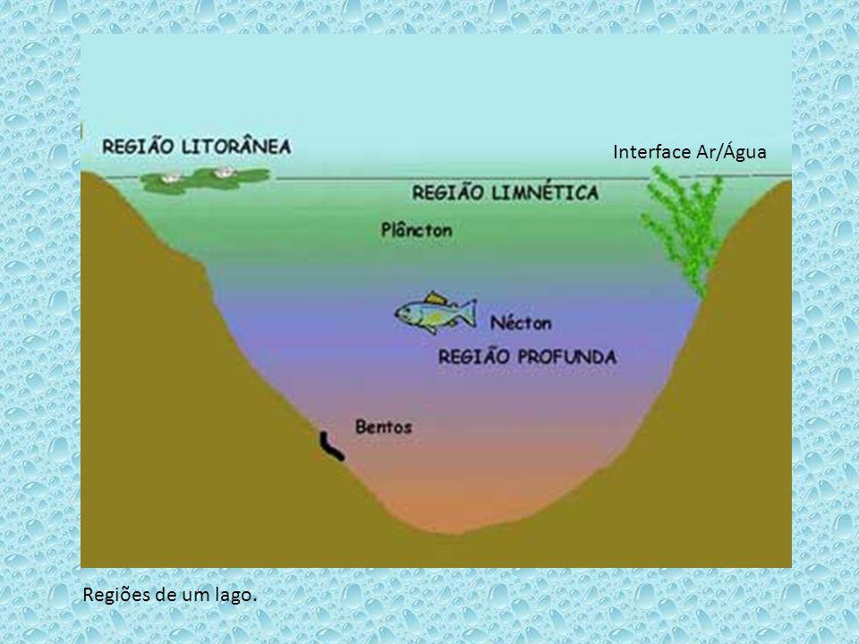 Interface Ar/Água Regiões de um lago.