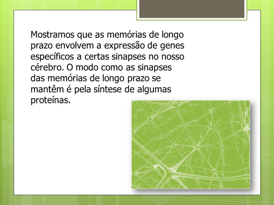 Mostramos que as memórias de longo prazo envolvem a expressão de genes específicos a certas sinapses no nosso cérebro.
