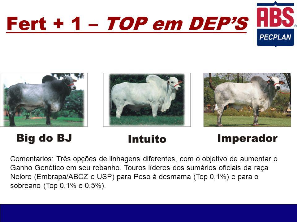 Fert + 1 – TOP em DEP'S