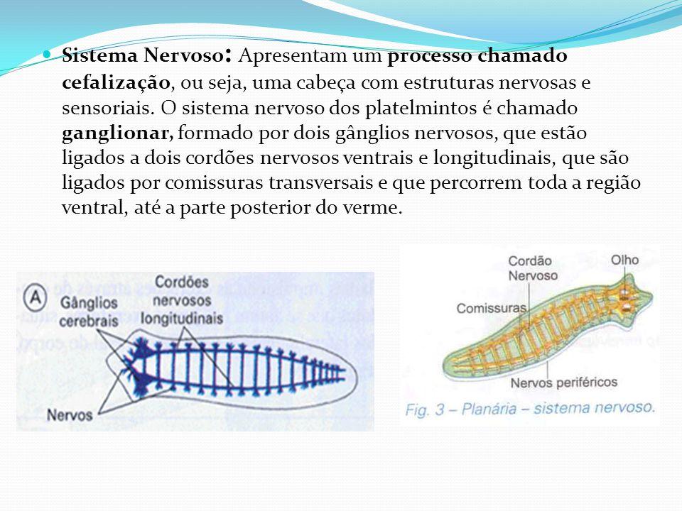 Sistema Nervoso: Apresentam um processo chamado cefalização, ou seja, uma cabeça com estruturas nervosas e sensoriais.