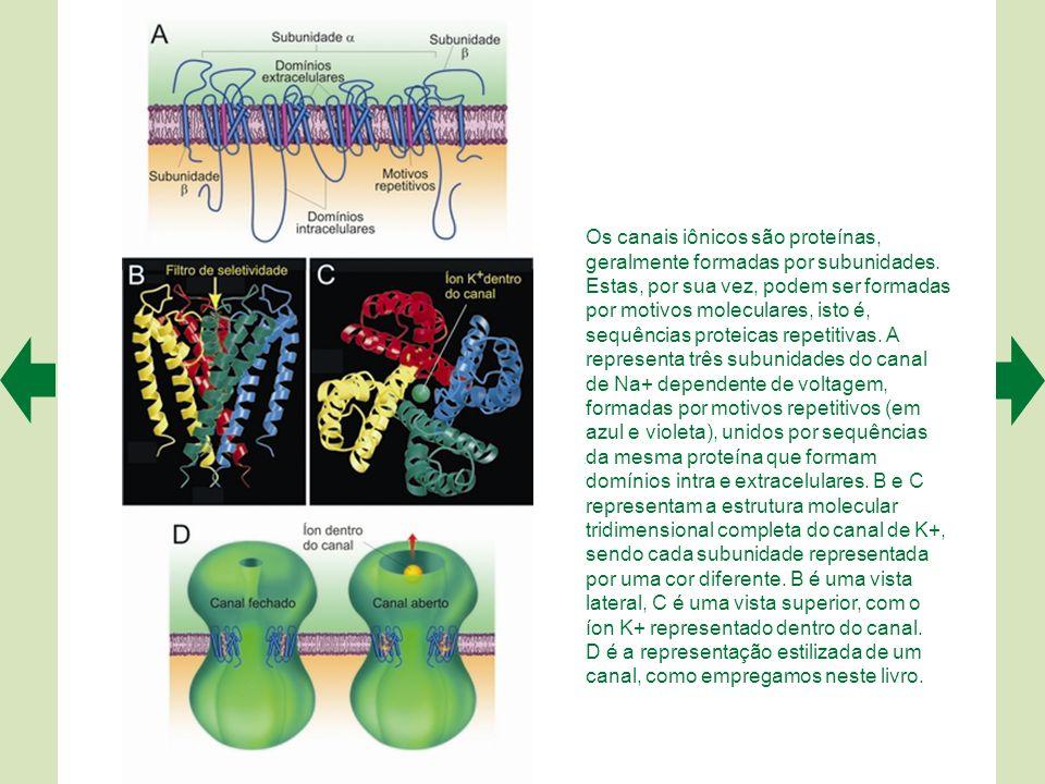 Os canais iônicos são proteínas, geralmente formadas por subunidades.