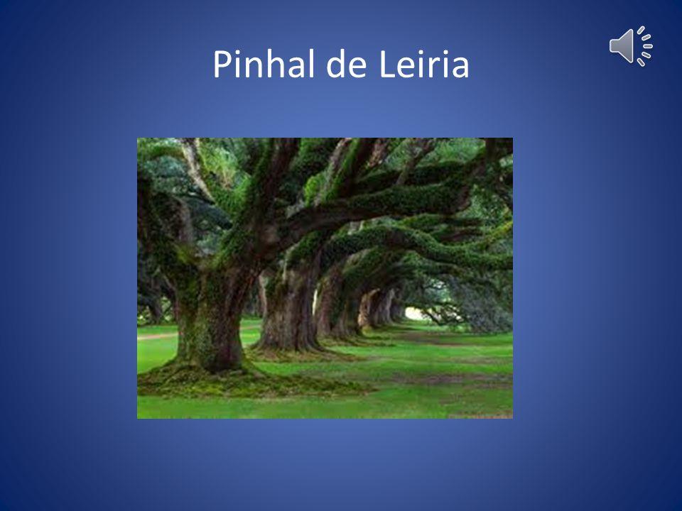Pinhal de Leiria