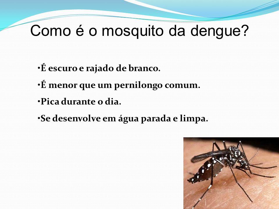 Como é o mosquito da dengue