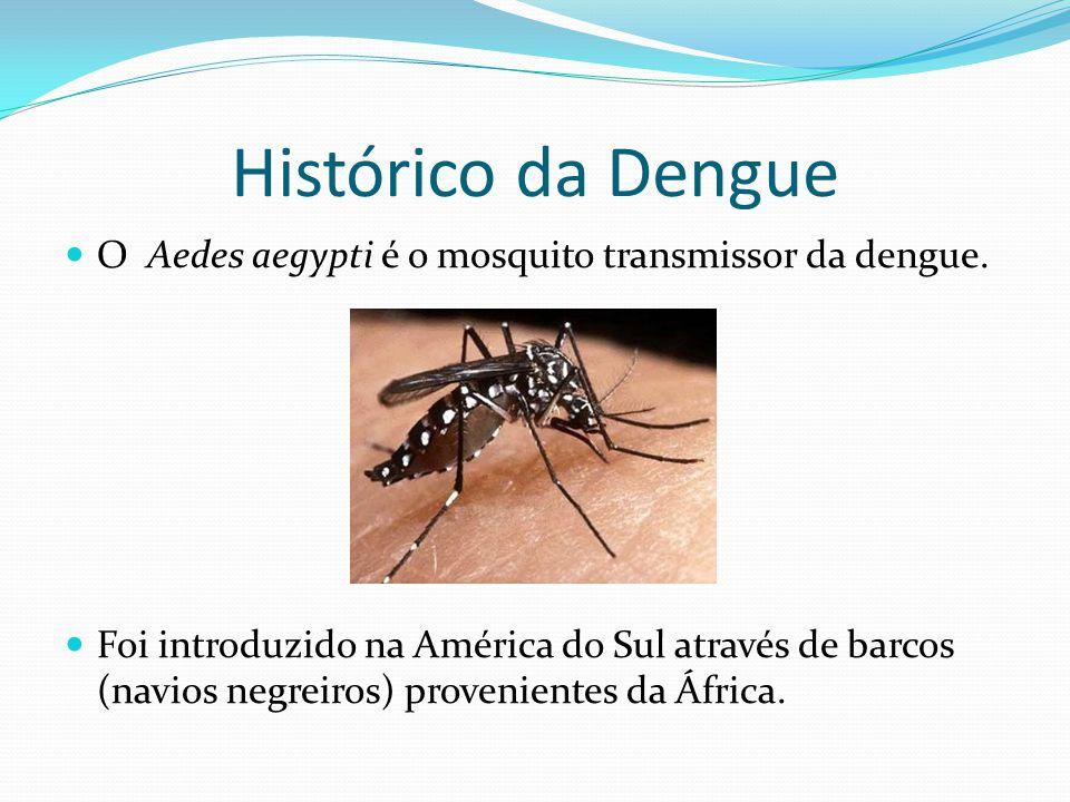 Histórico da Dengue O Aedes aegypti é o mosquito transmissor da dengue.