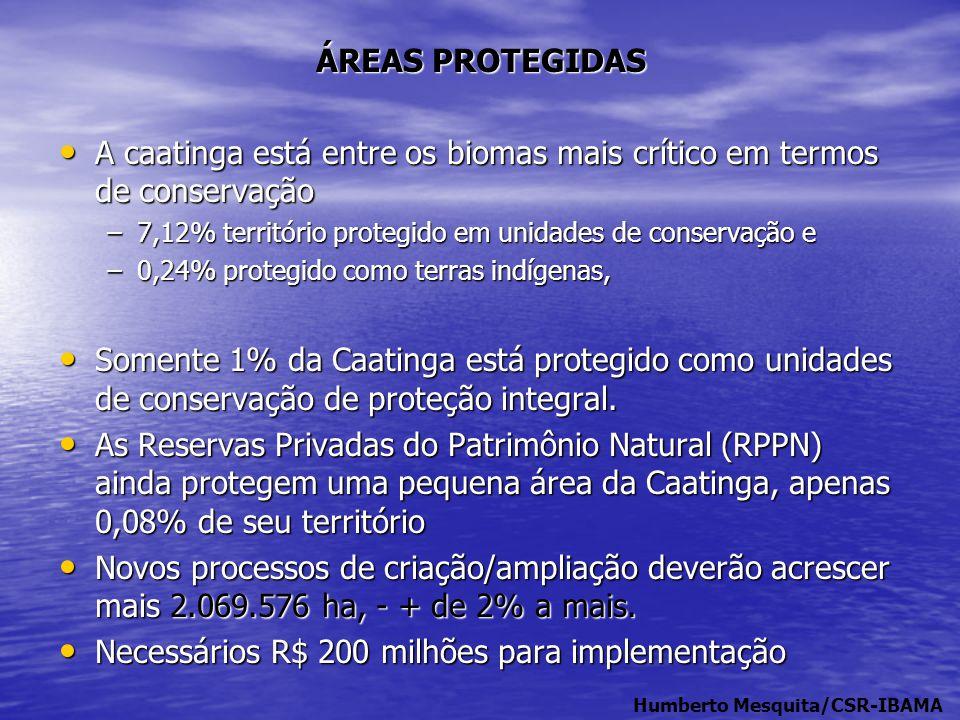 A caatinga está entre os biomas mais crítico em termos de conservação