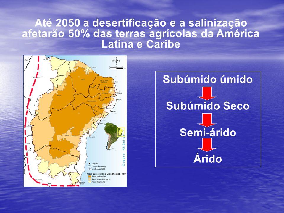 Até 2050 a desertificação e a salinização afetarão 50% das terras agrícolas da América Latina e Caribe