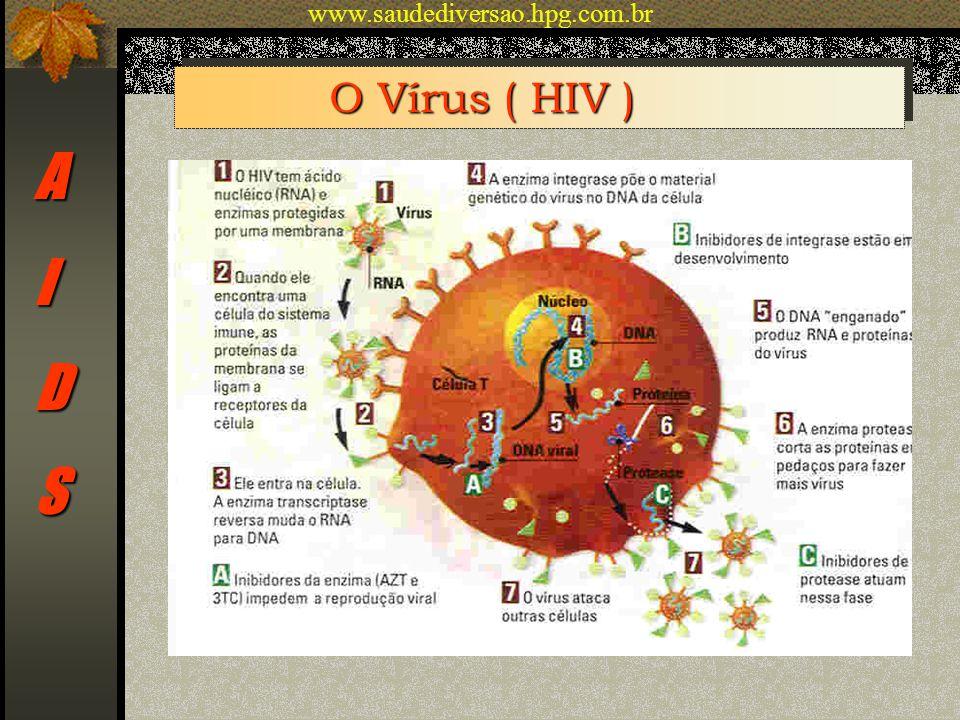 www.saudediversao.hpg.com.br O Vírus ( HIV ) A I D S