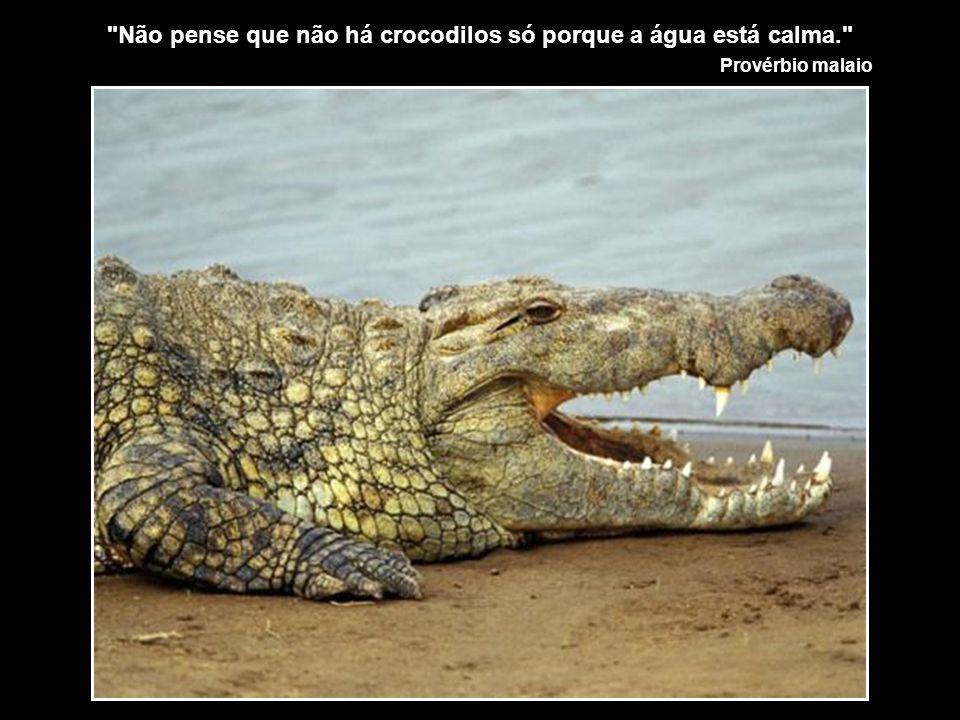 Não pense que não há crocodilos só porque a água está calma.