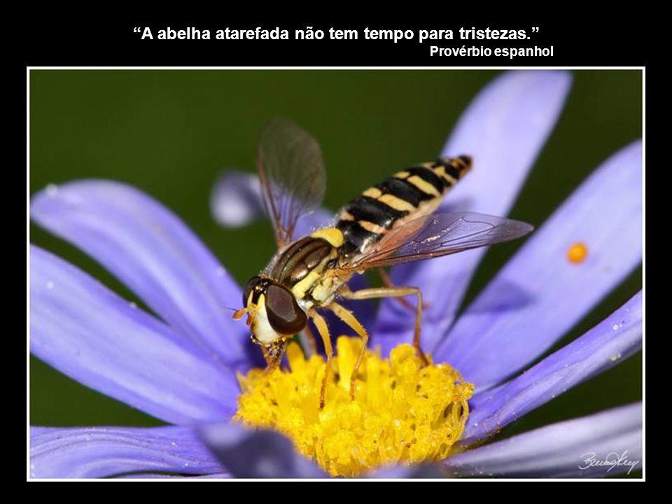 A abelha atarefada não tem tempo para tristezas.