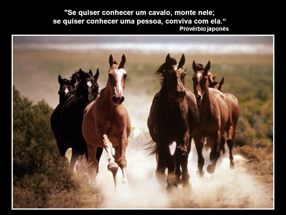 Se quiser conhecer um cavalo, monte nele;
