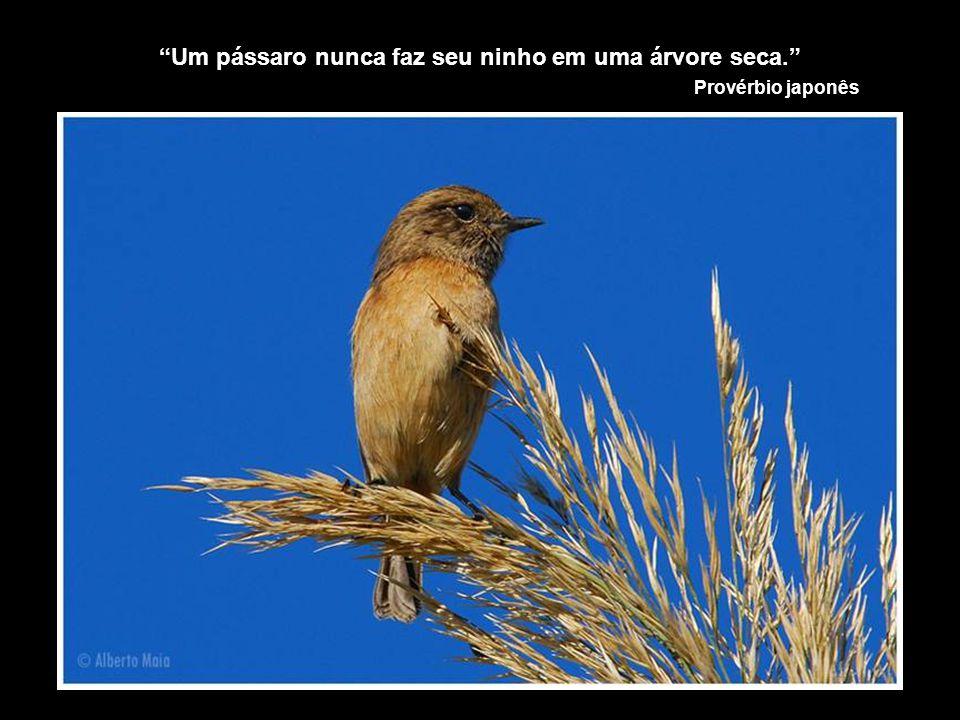 Um pássaro nunca faz seu ninho em uma árvore seca.